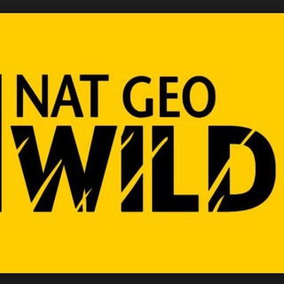 Telegram channel NAT GEO WILD logo